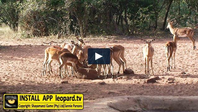 Kudu Hide, the remote waterhole hidden in the North