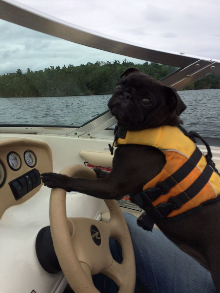Captain Jojo on National Dog Day!