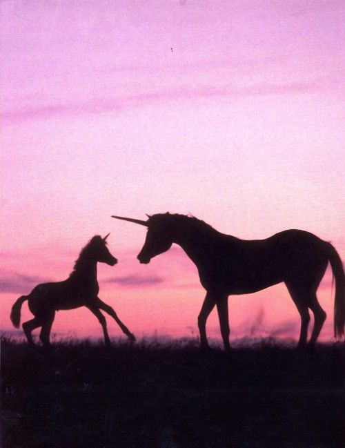 Baby Unicorn & Mom