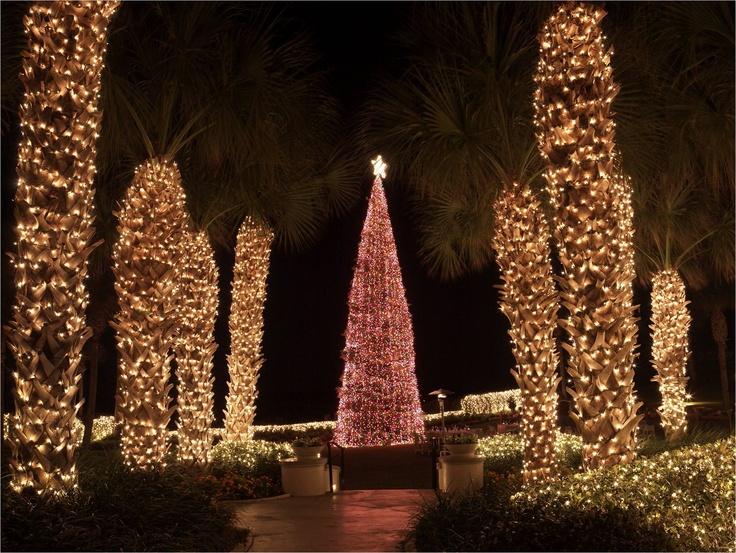 Christmas Tree Shop Hours