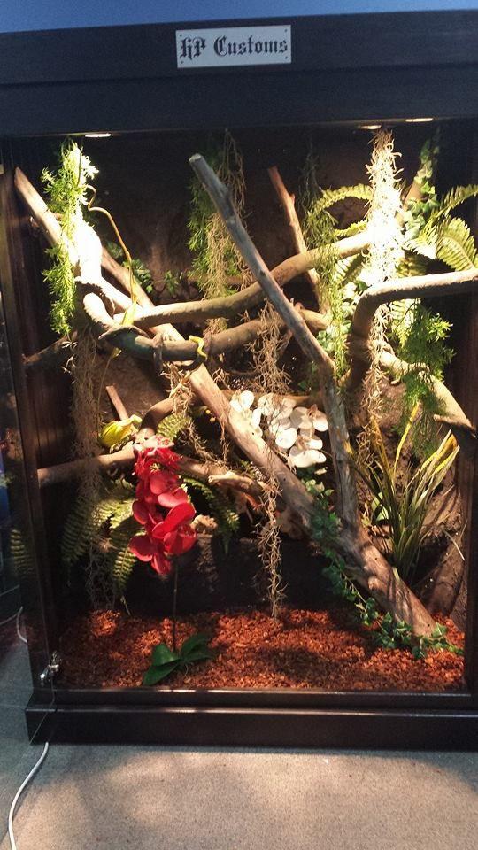 H P Reptiles 17 Best images ...