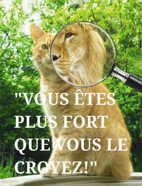 Citations option bonheur: Vous êtes plus forts que vous le croyez Visit our blog http://studiocigale.fr/blog-1/