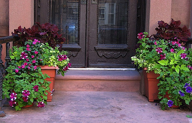 Front Porch Planters- I love the flowers growing over the side.