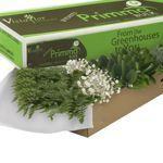 Fillers & Greens from Costco: $95 for 127 stems (includes baby's breath)