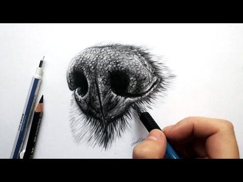 How to draw a realistic dog nose with graphite - Drawing tutorial | Leontine van vliet - YouTube