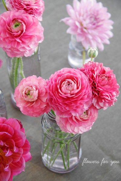 pink pink pink. flowers