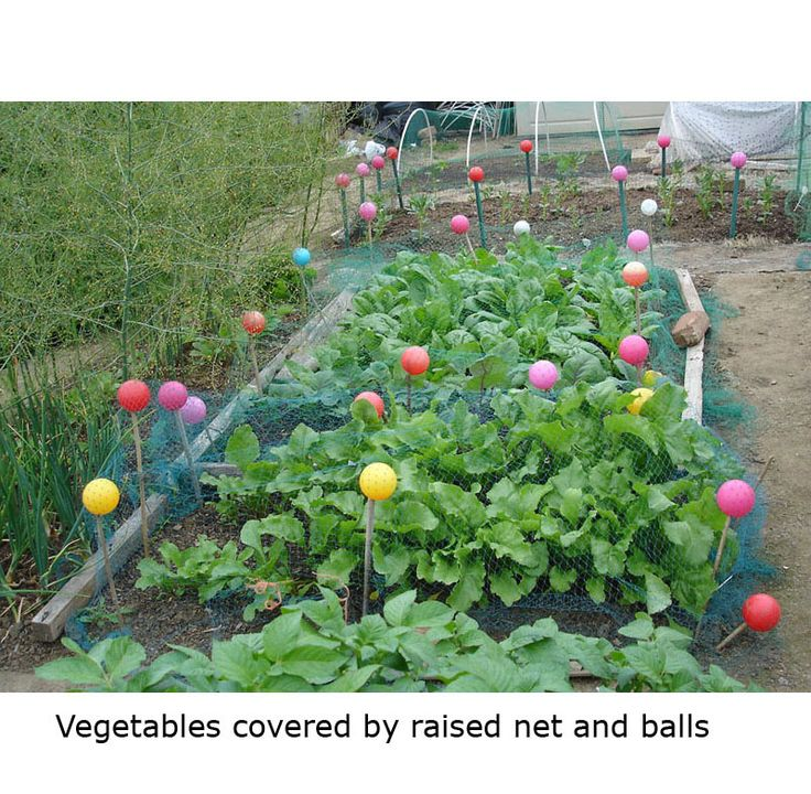 80 best images about allotment ideas on pinterest water for Garden allotment ideas