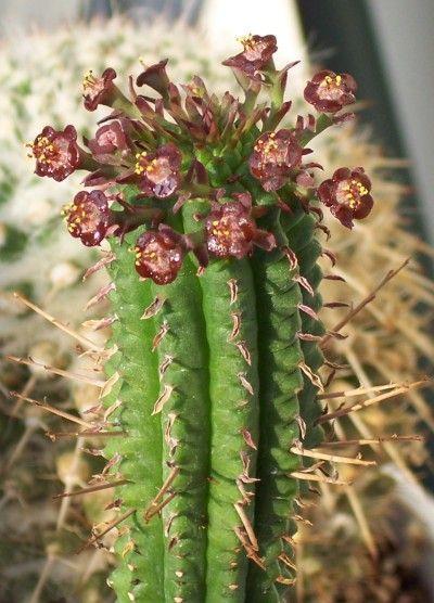 25+ best ideas about Cactus Art on Pinterest  Cactus ...