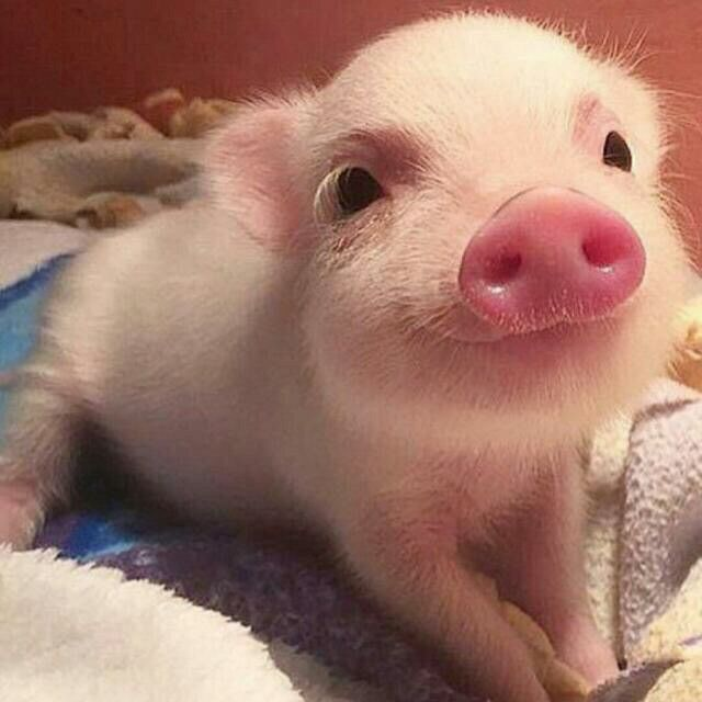 G pig will save the boring days. can this be marrige solution?