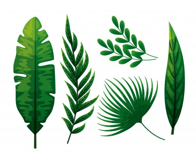 Scarica Gratis Insieme Di Foglie Tropicali Cartoon Leaf Tropical Leaves Plant Illustration Silhouettes of evergreen compound leaves, different shapes, leaves made of thin curved lines. tropical leaves
