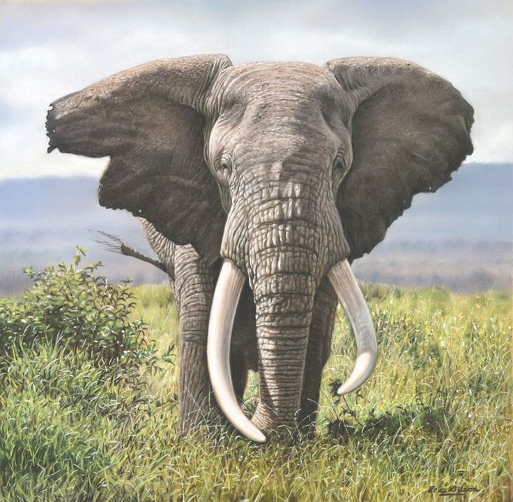 pastel painting of an African Elephant, a big tusker by ...