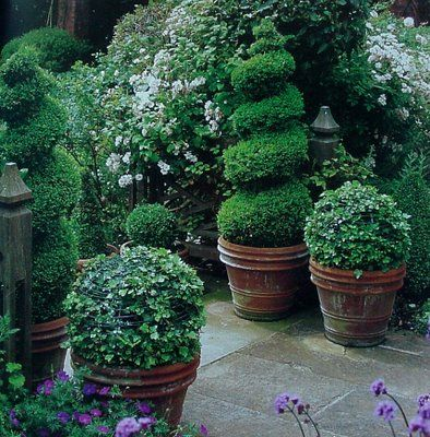 Topiaries in rustic planters