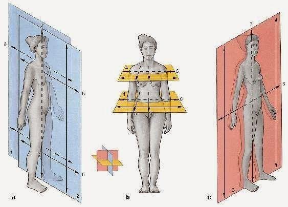 Radiología e Imagen para el Diagnóstico : ANATOMÍA RADIOLOGICA