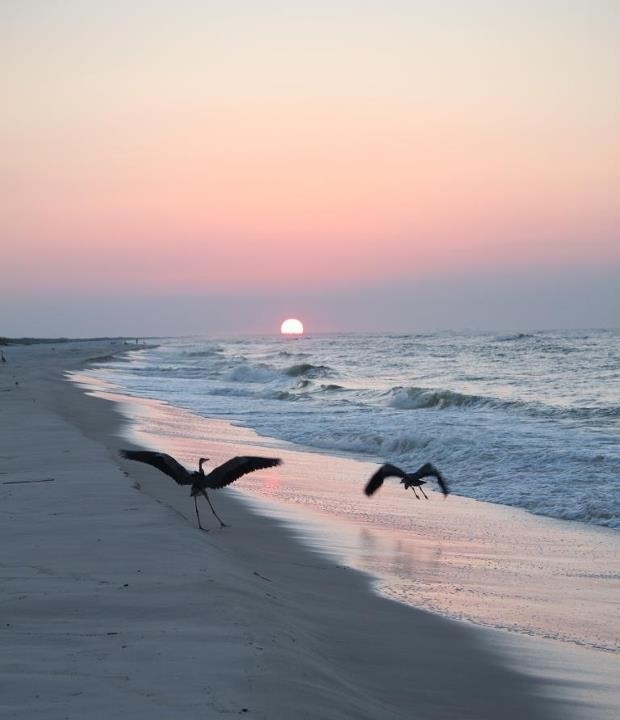 Perdido Key Hotels: 17 Best Images About Perdido Key On Pinterest