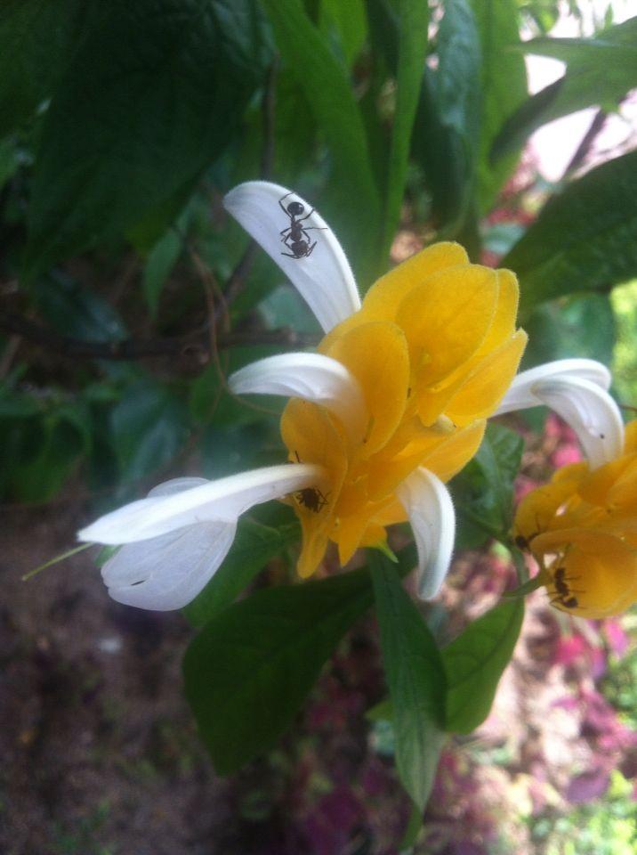 Yellowflo at wisma bayu