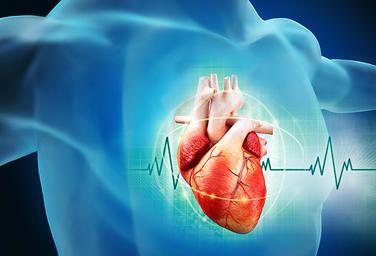How heart health affect your brain #limitless #pill #cerebraultra