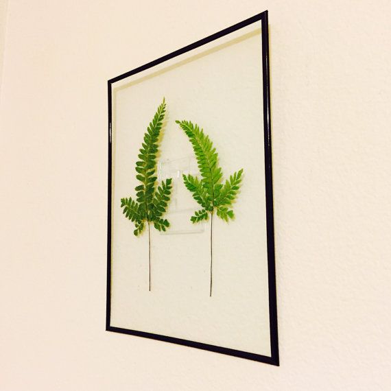 Framed Fern Leaves - Pressed Leaves in 11x14 Floating Frame by GlassHouseCollection