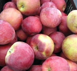 Apples at Farmers Market Vancouver - Dana Lynch