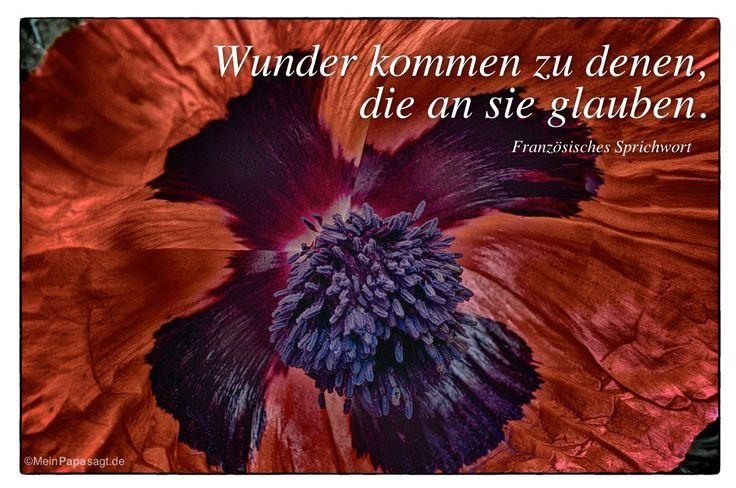 Mein Papa sagt...  Wunder kommen zu denen, die an sie glauben.  Französisches Sprichwort    Weisheiten und Zitate TÄGLICH NEU auf www.MeinPapasagt.de