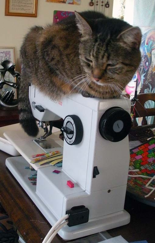 Sewing kitty.