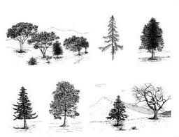 Best How To Draw Realistic Trees Plants Bushes And Rocks