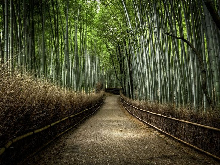 Bamboo forest in Kyoto, Japan. This was a National Geographic photo of the day shot. The photo was taken by Kyle Merriman.