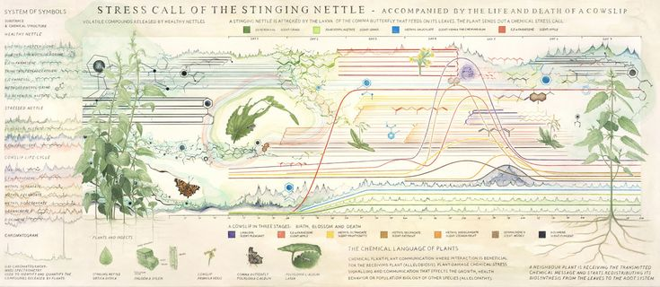 Christine Odlund's 'Stress Call of the Stinging Nettle' (2010)   COURTESY GALLERI RIIS, OSLO/STOCKHOLM, PHOTO BY JEAN-BAPTISTE BERANGER