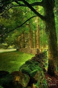 ancient stone fence lancashire England