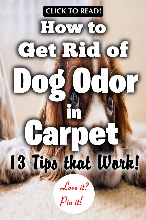 How To Get Rid Of Dog Odor In Carpet 13 Tips That Work Pet Odor Remover Carpet Smell Removing Dog Urine Smell