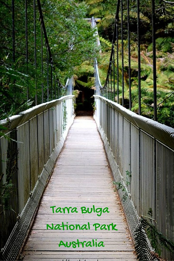 Tarra Bulga National Park is located in South Gippsland Australia. A walk in Tarra Bulgar is like being transformed to another time it brings out the explorer in all of us as you wind your way through the tracks with mountains of forest on either side of you.