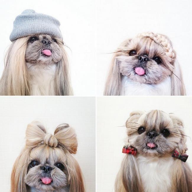 shih tzu hair styles