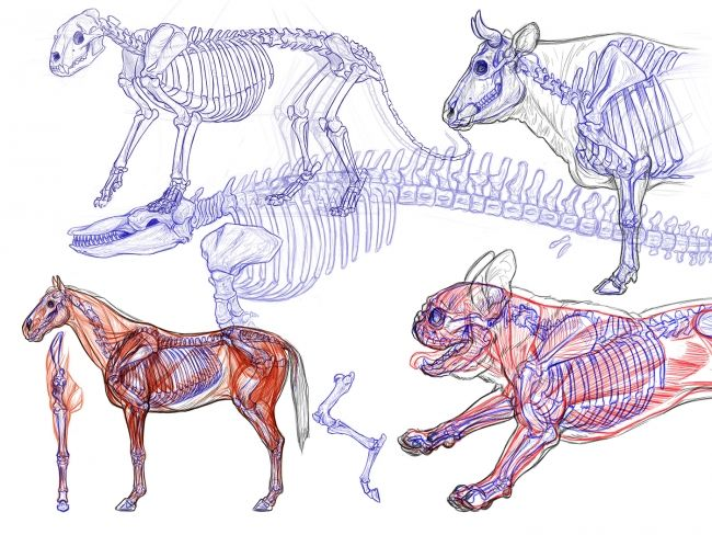 3 Techniques to Apply to your Creature Designs, with Brynn Metheney - article | CGSociety