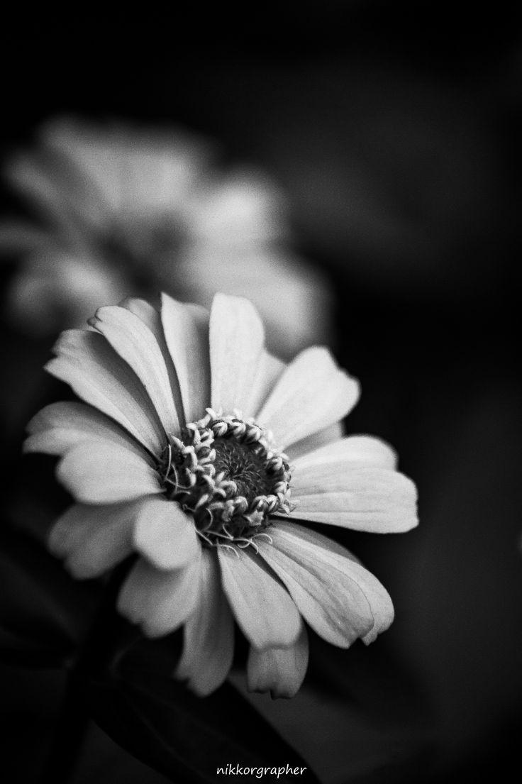 245 Best Fleurs Bw Images On Pinterest Black And White