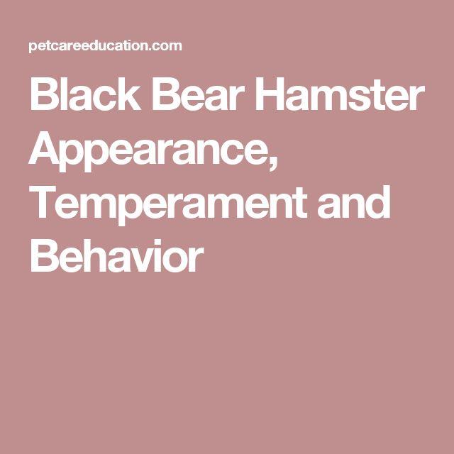 Black Bear Hamster Appearance, Temperament and Behavior