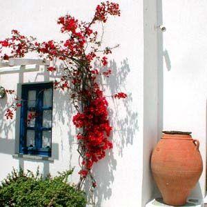 Anemomilos Apartments, Folegandros island, Greece Hotel Reviews   i-escape.com