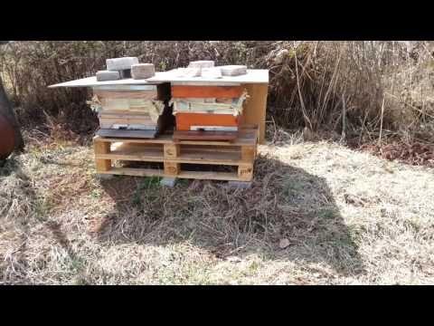 Kızılcık Çiçekleri ve Arılar - 2 (Arılar polen taşıyor.) - YouTube
