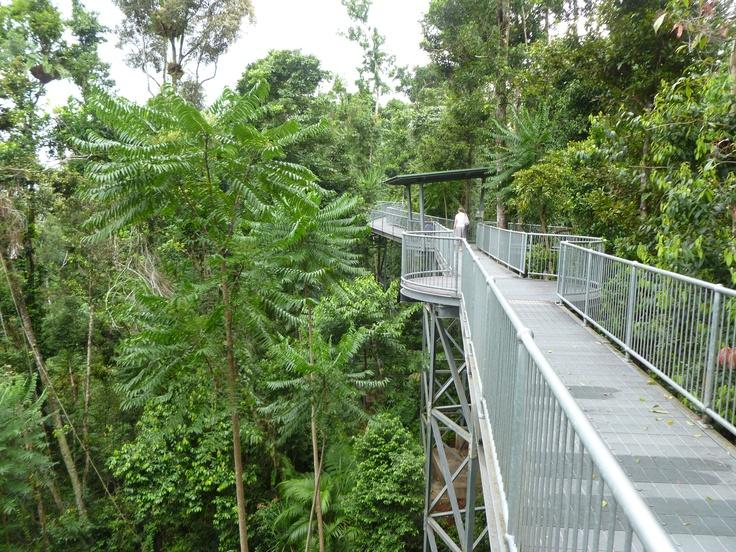 Mamu Walkway near Innisfail - a gorgeous rainforest canopy walk.