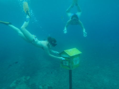 The World's Only Underwater Post Office #travel #Vanuatu >> I used to think that walking by the beach on my way to the post office was awesome, but this truly takes the cake...