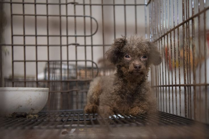 """Rolling Stone crushes puppy mill trade 