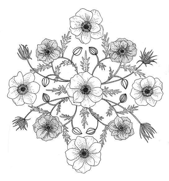 Anemones || Leah Trengove