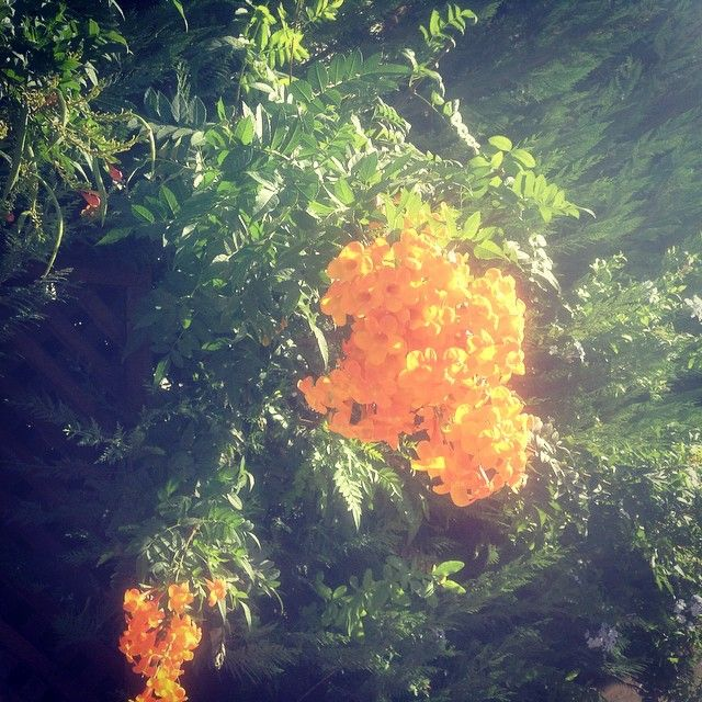 I'm gonna miss summer more than I could say #flowers #flowerower #amman #jordan