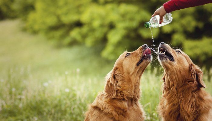 It is officially the time of year when heat becomes not only annoying and excessive, but also downright dangerous to animals and humans alike. Pets specifically often get the short end of the stick in the summer time and don't get adequate care that they need to stay cool and hydrated, and... #heatstroke