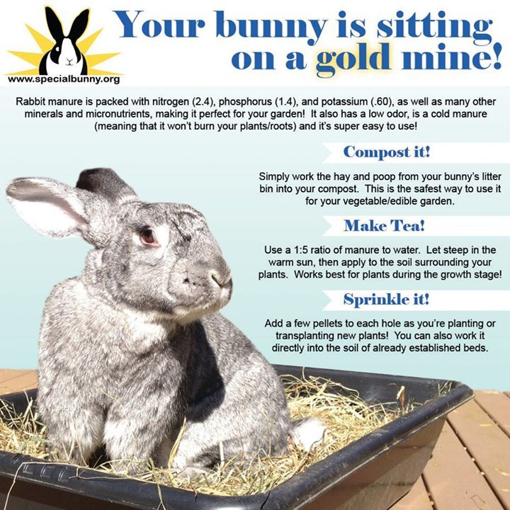I've wasted 2 years of bunny poop!!! Gotta start saving for Spring & give these hints a try!  :3