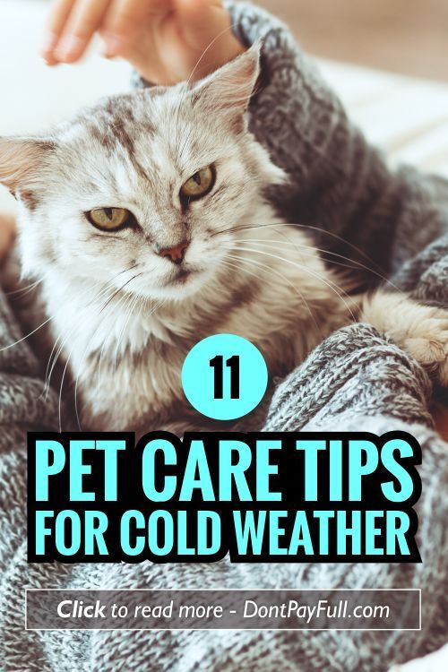 Worried about your four-legged friend? Here are 11 Pet Care Tips for Cold Weather to help you make it through fall and winter! #DontPayFull