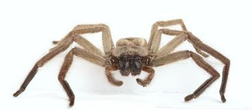 Avondale Spider! Auckland