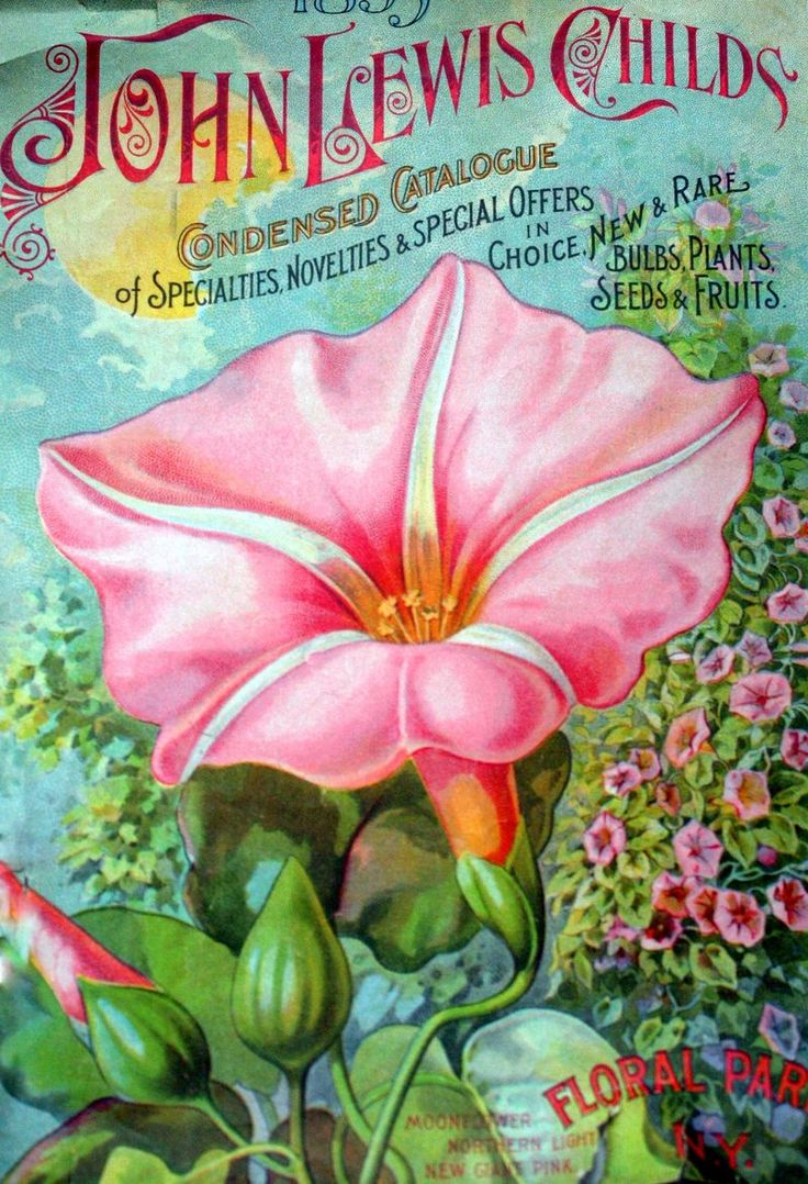 Colorful Vintage Floral Images: Free Downloads - Mitzi's Miscellany