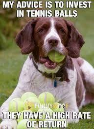 Image result for dog meme funny – Train Your Pet Dog