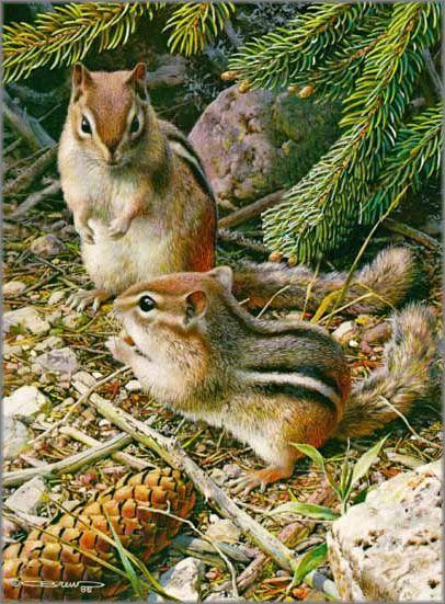 Carl Brenders - Under the Pine Trees - Chipmunks