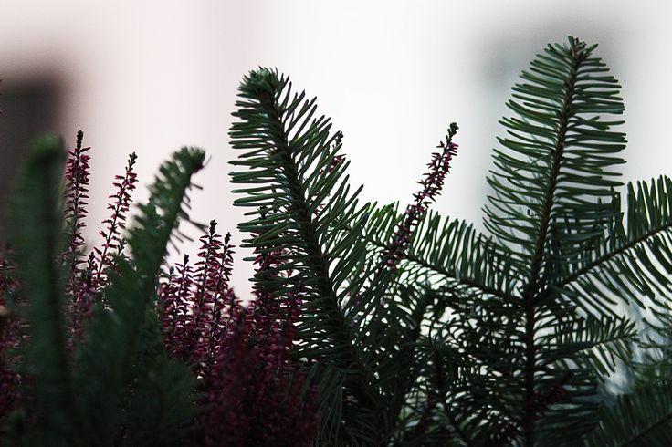 LINKOGRAPH » LED Lichtervorhang 20 Sterne 180x40cm warmweiss http://redir.ec/2yde1