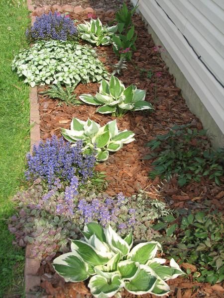 Shade garden with flowers and colorful foliage - for areas that receive shade throughout the day with some sun in the morning and late afternoon. Plants that like shade/part shade: Hostas, Lamium, Astrantia, Ajuga, Astilbe, Lily of the Valley, Heuchera, Pulmonaria, Japanese Painted Fern, & Dicentra.